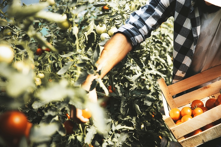 Pesticides And Herbicides, To Use Or Not To Use?